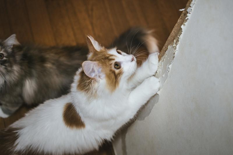 猫のひっかく癖に困っている飼い主様必見!しつけ方法を解説!