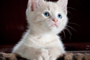 キャットフードは缶詰をあげるべき?猫の餌に関する不安を解消!