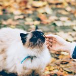 アカナ(ACANA)って何?猫の餌で人気のアカナを徹底解説!
