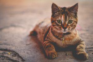 カルカン(kalkan)って何?猫の餌で人気のカルカンを徹底解説!