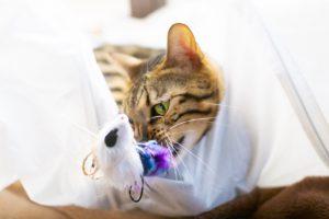 猫のプラスチックの誤飲の予防法と対処法は?猫用の商品もご紹介!